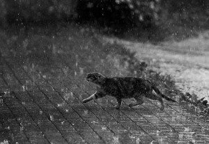 Citation dans Citations chat-sous-la-pluie-300x207